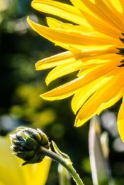 New Study: Common Pesticide Impairs Bees' Flying Ability Thumbnail