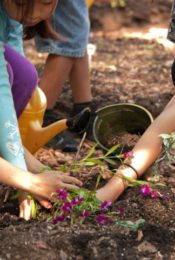 Government & Local Projects Try To Nurture Preschoolers' Love Of Nature Thumbnail
