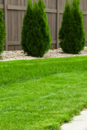 3 Fall Lawn Care Tips For American Homeowners Thumbnail