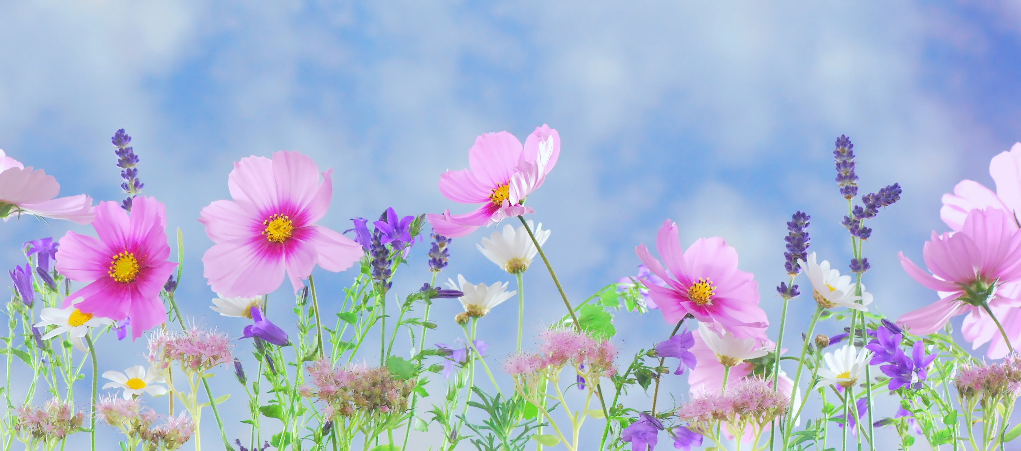 A guide to using flowers in your health and beauty routines izmirmasajfo