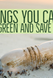 4 Things You Can Do To Go Green And Save Money Thumbnail