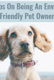 Our Top 4 Tips On Being An Environmentally Friendly Pet Owner Thumbnail
