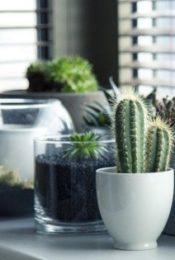 Small Steps that Add Up to Make for a Greener Home Life Thumbnail